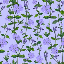 Wildflowers Pattern Seamless B...