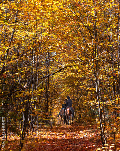Riders on horseback travel during autumn in the woods Fototapet