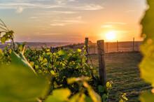 Sonnenuntergang über Einem Weinberg Mit Malerischem Himmel