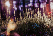 Abstract Dreamy Photo Of Summe...