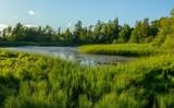 Krajobrazy rośliny i zwierzęta