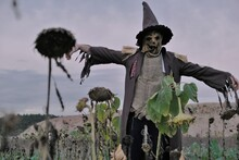 Halloween Celebration Concept.  Spooky Scarecrow In A Field With Dried Sunflowers On A Dark Cloudy Sky Background. Scarecrow Costume.Autumn Carnival In October