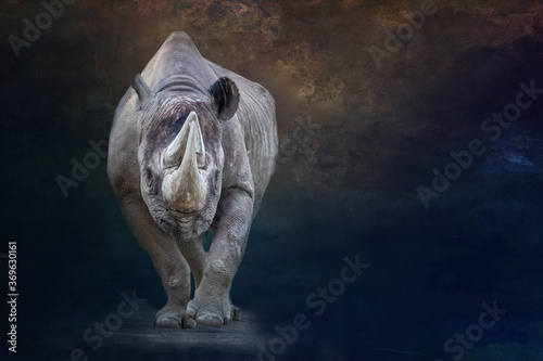 Photo portrait of a large standing rhino