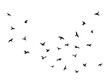 Flying bird. Flock of birds black silhouettes, abstract flight migration animal wildlife, simple seagull shapes decorative element vector isolated illustration