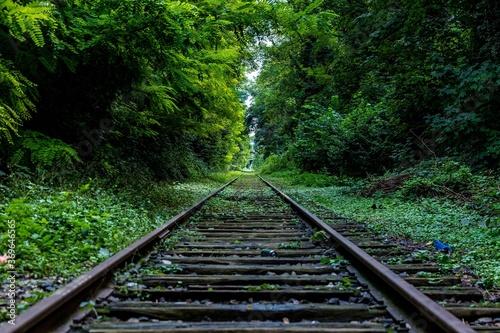 Fotografia railway in the forest