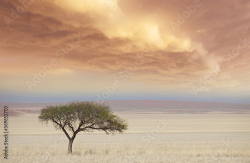 Obraz African savannah - fototapety do salonu