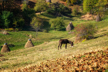 Amazing Autumn View With A Donkey Grazing On An Autumn Mountain Meadow, Balkan Mountains, Bulgaria