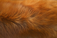 Dog Fur Texture. Red-haired, Close-up. Nova Scotia Duck Tolling Retriever.