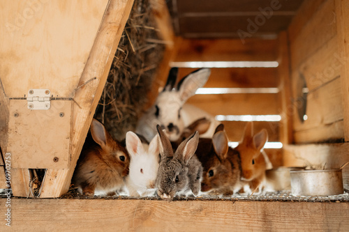 Photo group of baby rabbits in a cage at a farm