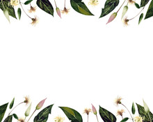 Watercolor Template Post Card With Flowers Clematis On White Background. Waterclolor Illustration.