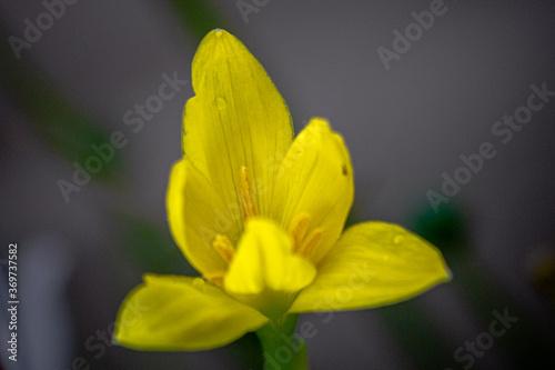 Fototapeta flor obraz na płótnie