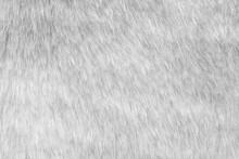White Fur Fabric Texture Backg...
