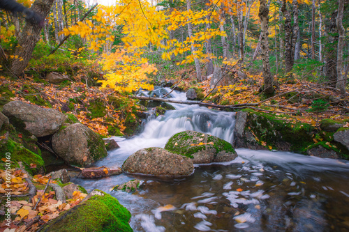 Photo Tranquil forest scenery of autumn fall foliage colors with water stream inside Cape Breton Highlands National Park