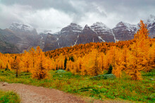 Autumn Trees In The Rocky Mountains