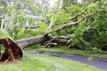 Tree Falls Over Driveway And On To House During Tropical Storm Isaias