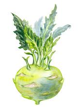 Kohlrabi Cabbage(Brassica Oler...