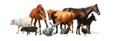 Fototapeta Zwierzęta - Collage with horse and other pets on white background. Banner design
