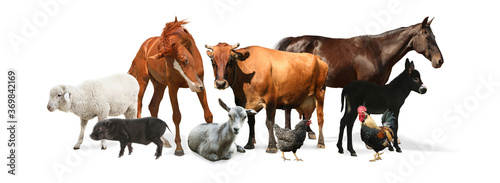 Collage with horse and other pets on white background. Banner design © New Africa