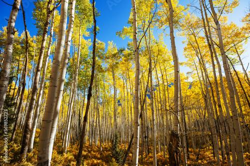 Obraz Autumn forest - fototapety do salonu