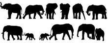 Set Of Elephant Silhouettes. E...