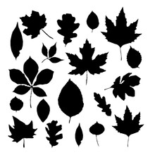 Leaves Vector Set Isolated Iso...