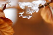 canvas print picture - Eis, Eiskristall, Winter, Kalt, Ast, Makro, Nahaufnahme