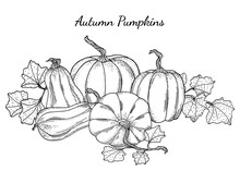 Black And White Pumpkins Vector Illustration. Hand Drawn Vintage Autumn Composition. Outline Gourds And Squashes With Leaves For Banners, Cards, Posters, Halloween, Thanksgiving, Coloring Book.