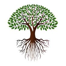 Mangrove Tree Vector Illustrat...