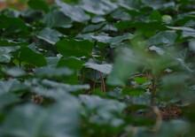 森の草のクローズアップ