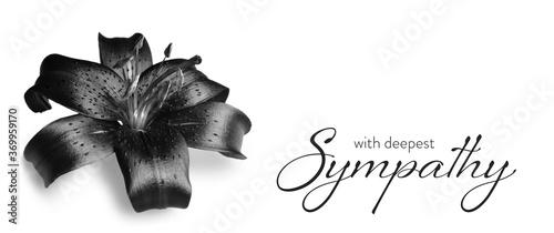 Obraz na płótnie Sympathy card with dark lily flower isolated on white background