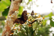 Butterfly On Flower At Habitat...