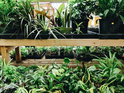 House plants on display on a shelf