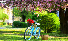 Season Of Love. Beauty Of Spring. Retro Bicycle With Tulip Flowers In Basket. Vintage Bike In Park. Sakura Blossom In Spring Garden. Nature Full Of Colors And Smells. Relax And Travel. Romantic Date