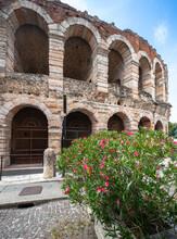 Verona Arena (Arène De Vérone) Et Laurier Rose,  Piazza Bra, Vénétie, Italie