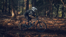 Mountain Bike Rider In The Forest