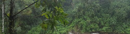 Photo abundant vegetation in a jungle