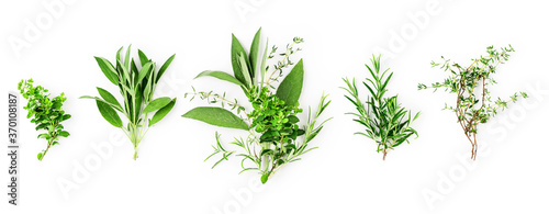 Foto Rosemary, marjoram, sage and thyme collection
