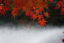 Close-up Of Autumnal Leaves Al...