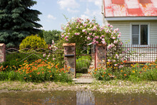A Beautiful Well-kept Courtyard With Flowering Climbing Rose Bushes, A Small, Poor House In A European Style, With Puddles After The Rain.