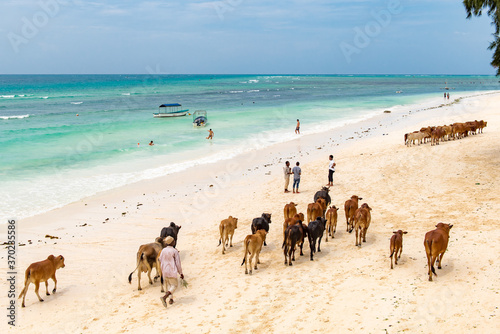 Valokuvatapetti Tanzania Zanzibar