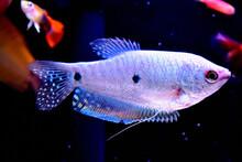 Colorful Beautiful Fish
