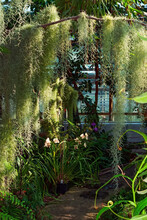 Tropical Jungle With Spanish Moss