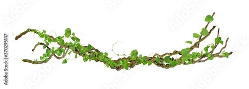 Fotografia circular vine at the roots