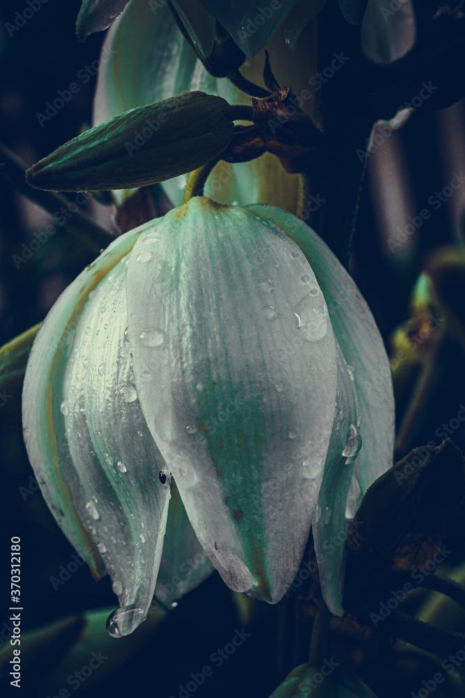 Deszczowy kwiat - obrazy, fototapety, plakaty