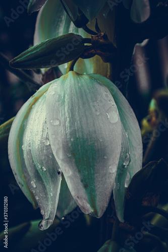 Obraz Deszczowy kwiat - fototapety do salonu