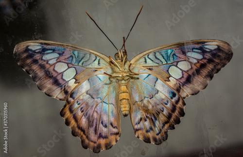 farfalla Tapéta, Fotótapéta