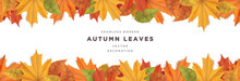 Beautiful Autumn Leaves Decorative Seamless Border Frame Vector Template
