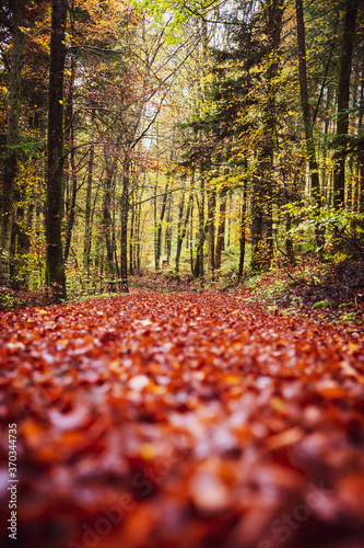 Photo Forest path background in autumn or fall season with red foliage