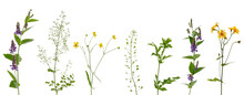 Many Various Stems Of Meadow Grass With Yellow, White And Purple Flowers On White Background