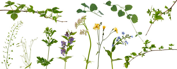 Many stems of various meadow grass with yellow, white and purple flowers and tree branches with young leaves on white background